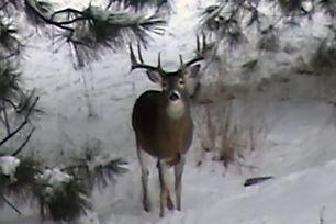 wildlife 3.jpg