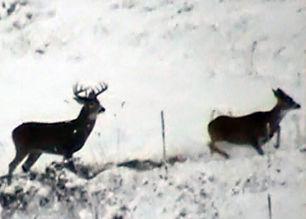 wildlife 1.jpg