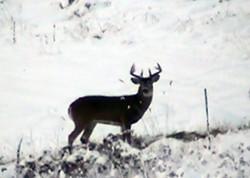 wildlife 2