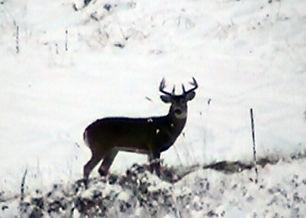 wildlife 2.jpg