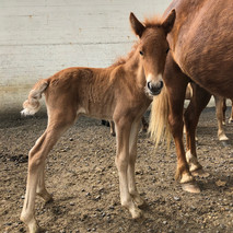 Foal of 2019