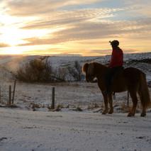 Hestheimar-Þjóðólfshagi-rider-icelandic-