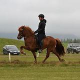 Hestheimar-salehorses.jpg