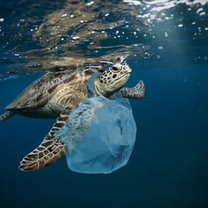 « Earth Day » : les marques s'engageant pour la protection des océans