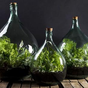 DIY Terrarium : Un peu de vert pendant ce confinement !