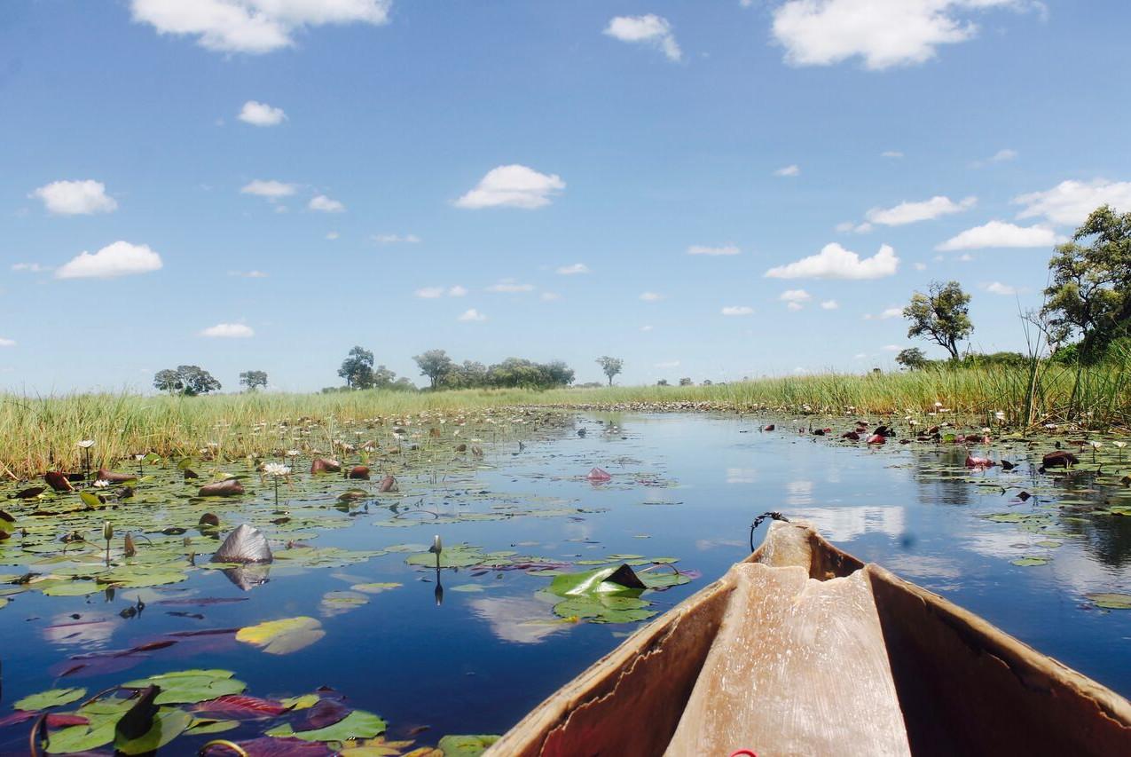 Mokoro on the Okavango