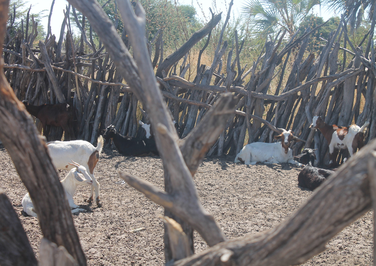 Goat kraal