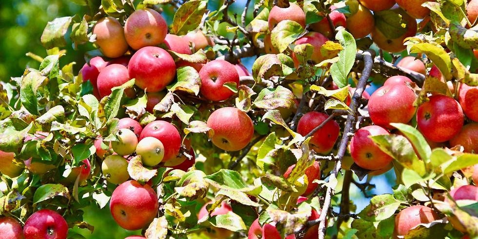 Apple Harvest Express