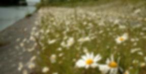 Vaarttaluds Moen_edited.jpg