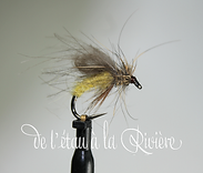 emergente trichoptere jaune (Copier).png