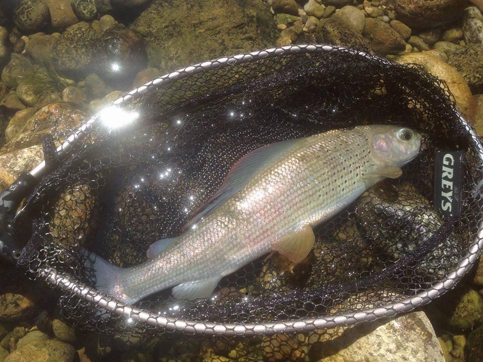 """Les plus beaux poissons pris à l'étranger par les mouches """"De l'étau à la rivière""""e l'étau à la rivière"""""""
