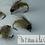 Thumbnail: Nymphe de trichoptere NS 2