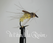 nymphe trichoptere jaune (Copier).png