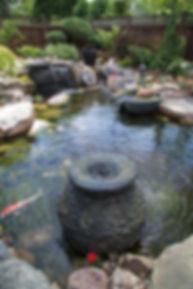 Ecosystem Pond_15.jpg