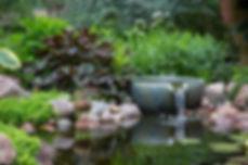 Ecosystem Pond_11.jpg