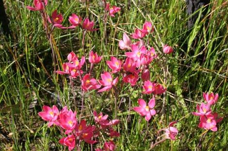 Wildflowers in Newlands Reserve