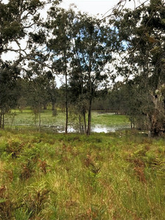 A swamp in Newlands Reserve