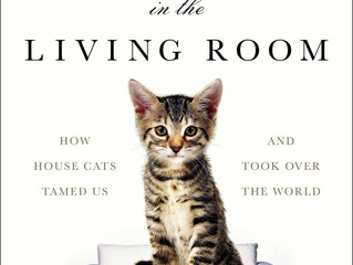 Caturday Reads:  Give a roar for The Lion in the Living Room