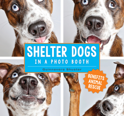 Great adoptable pups, great picturess