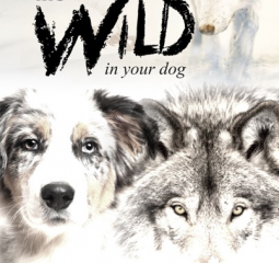 See the wolf inside your dog