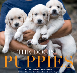 The Dogist - Puppies