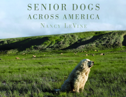 Caturday Reads: A loving portrayal of the older dogs who make our lives complete