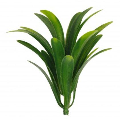 Fairy Plant