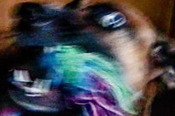 Lemmy_01.jpg