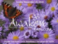 TT Butterfly w logo 2.jpg