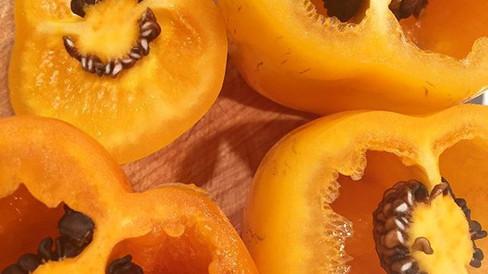 Manzana (Rocoto) Peppers