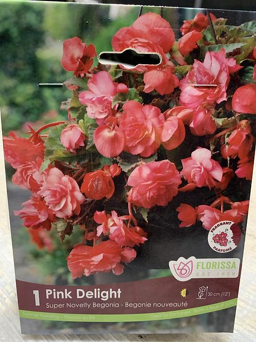 Pink Delight Tuberous Begonia Bulb