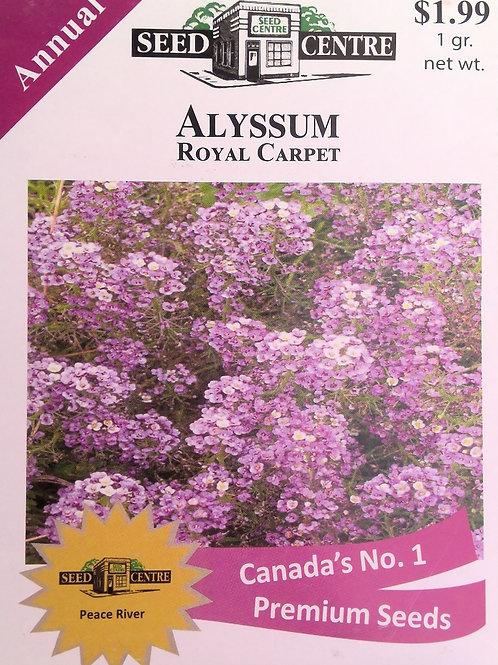 Alyssum Royal Carpet (Annual Flower)