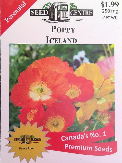 Poppy Iceland (Perennial)
