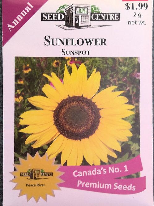 Sunflower Sunspot (Annual Flower)