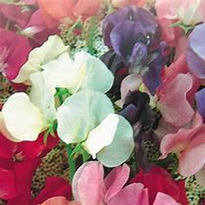 Sweet Pea Mix