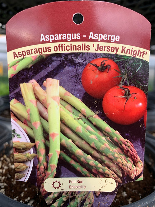 Asparagus Jersey Giant