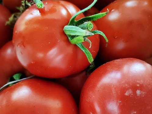 Prairie Pride Tomato