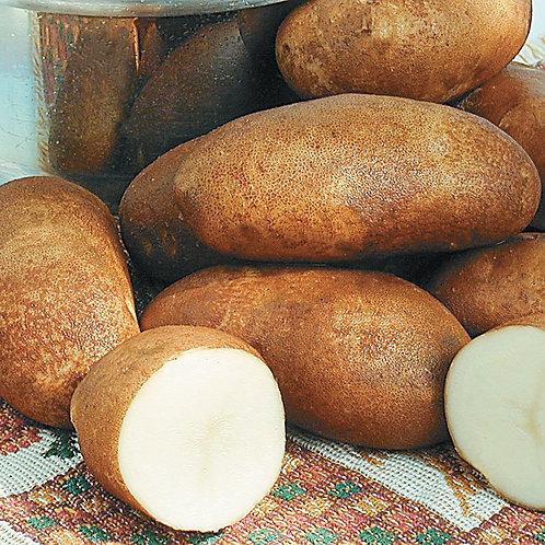 Seed Potatoes - Russett Burbank 5 lb Bag