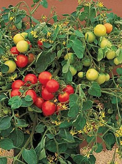 Tumbler Tomato