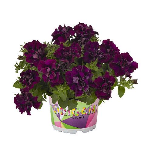 Sparkle Purple Combo