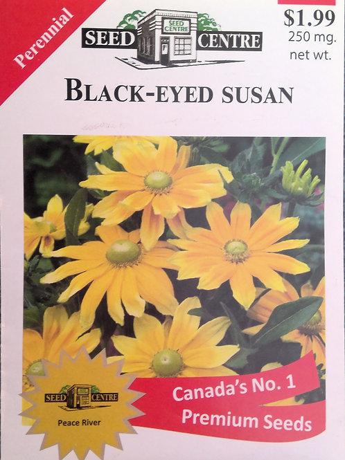 Black Eyed Susan (Perennial)