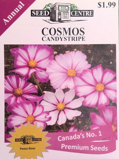Cosmos Candystripe (Annual Flower)