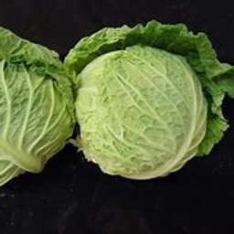 Ace Savoy Cabbage