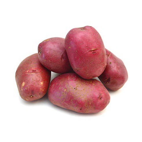 Seed Potatoes - Sangre 5 lb Bag (in store pick up only)