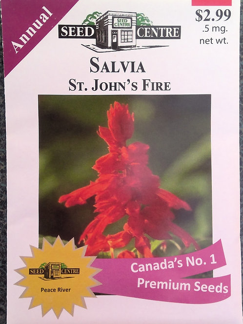 Salvia St. Johns Fire (Annual Flower)