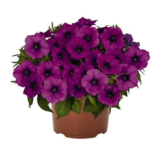 Endurable Lilac Combo