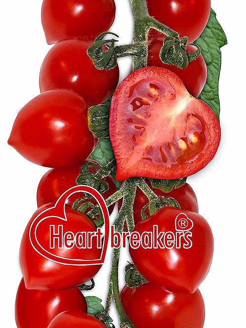 Heartbreaker Dora Tomato