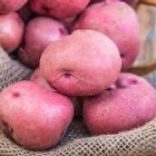Seed Potatoes - Red Pontiac 5 lb Bag