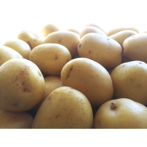 Seed Potatoes - Adora 5lb Bag (in store pick up only)