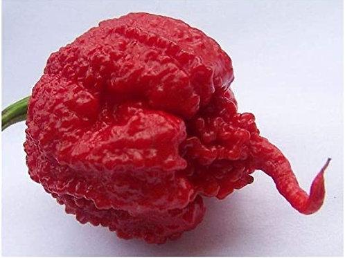 Pepper - Carolina Reaper